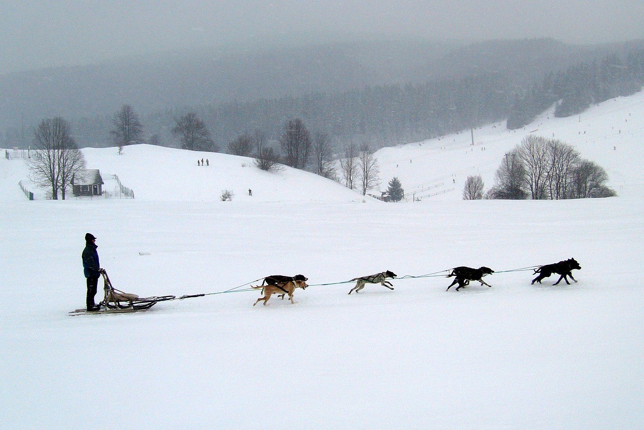 dog sledding for teams